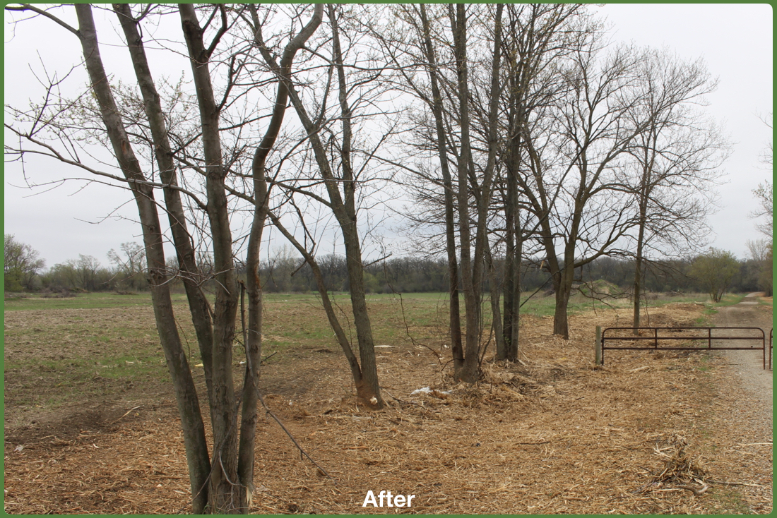 Buckthorn Removal