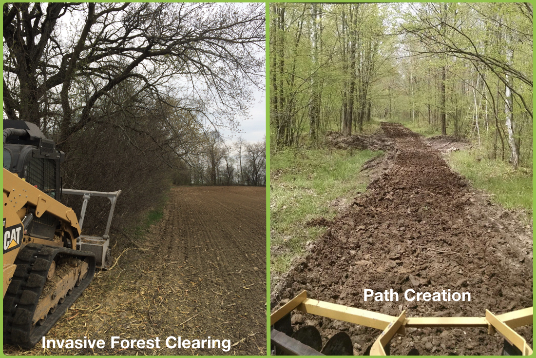 Forest Path Creation and Mulching