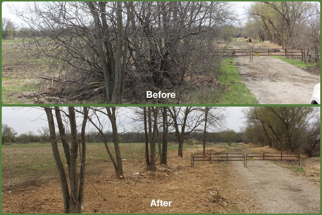 Buckthorn Removal Before and After